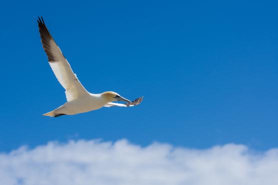 Pájaro volando en libertad